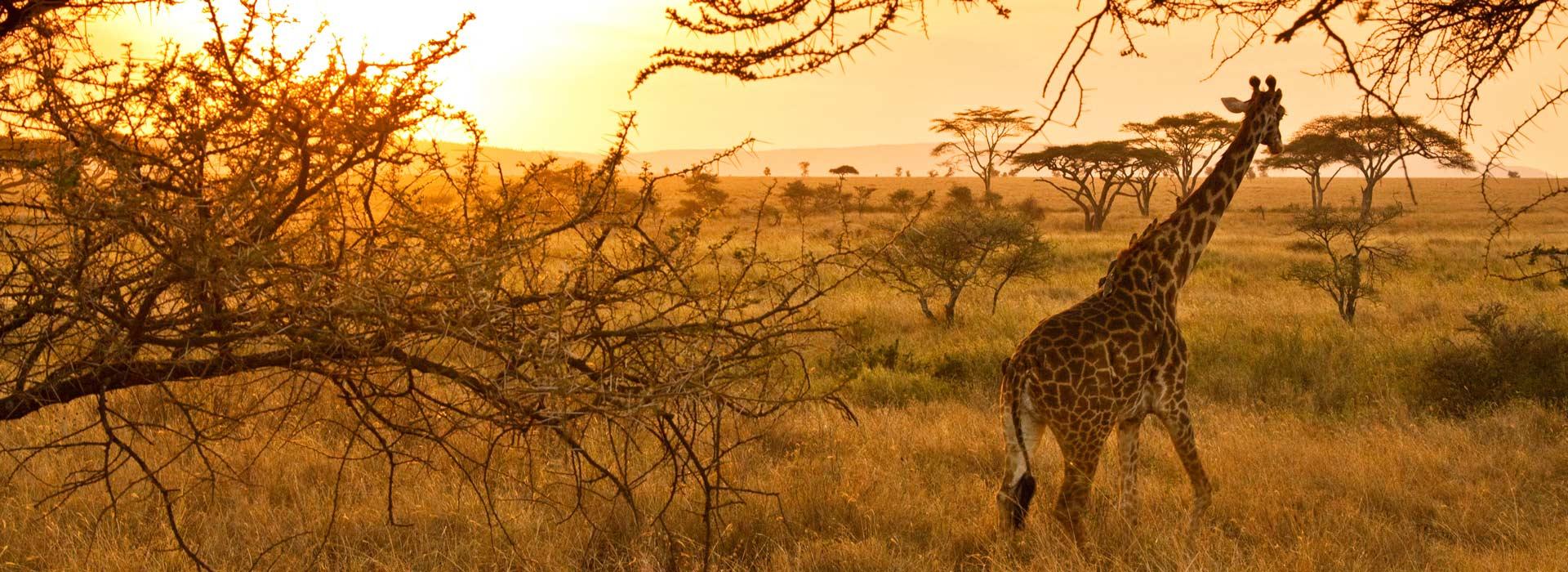 Група Танзания и Занзибар