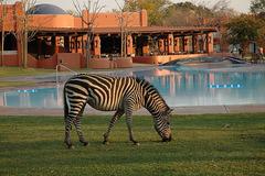 Zambezi Sun - водопади Виктория - Фотогалерия - снимка 2