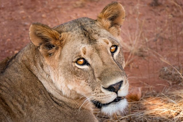 Южноафриканско Приключение - Екскурзия в ЮАР и Зимбабве