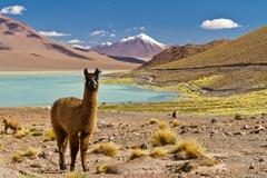 Чили и Великденският остров - Фотогалерия - снимка 5