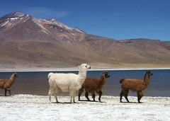 Чили и Великденският остров - Фотогалерия - снимка 11