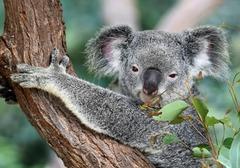 Екскурзия Австралия и Нова Зеландия - Фотогалерия - снимка 14