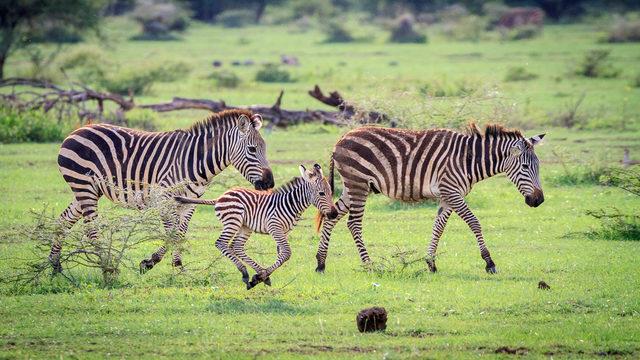 Индивидуално сафари в Танзания