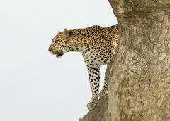 Индивидуално сафари в Танзания - Фотогалерия - снимка 1