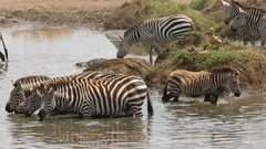 Индивидуално сафари в Танзания - Фотогалерия - снимка 4