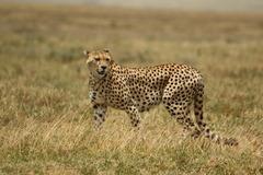 Индивидуално сафари в Танзания - Фотогалерия - снимка 5