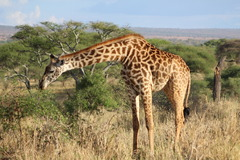 Индивидуално сафари в Танзания - Фотогалерия - снимка 7