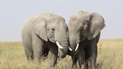 Танзания и Занзибар - Фотогалерия - снимка 11