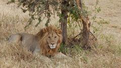 Танзания и Занзибар - Фотогалерия - снимка 13