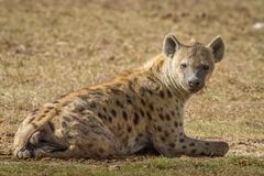 Индивидуално сафари в Танзания - Фотогалерия - снимка 16
