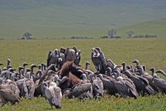 Индивидуално сафари в Танзания - Фотогалерия - снимка 17