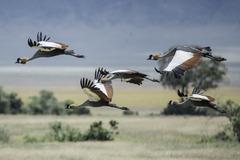 Индивидуално сафари в Танзания - Фотогалерия - снимка 18