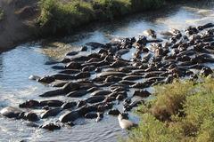 Индивидуално сафари в Танзания - Фотогалерия - снимка 20