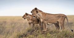 Сафари в Кения