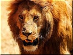 Сафари в Кения - Фотогалерия - снимка 2