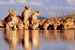 Сафари в Кения - Фотогалерия - снимка 6