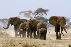 Сафари в Кения - Фотогалерия - снимка 11