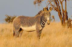 Сафари в Кения - Фотогалерия - снимка 13