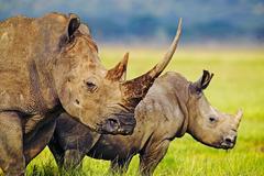 Сафари в Кения - Фотогалерия - снимка 15