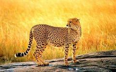 Сафари в Кения - Фотогалерия - снимка 16