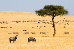 Сафари в Кения - Фотогалерия - снимка 17