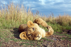 Сафари в Кения - Фотогалерия - снимка 20