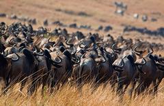 Сафари в Кения - Фотогалерия - снимка 21