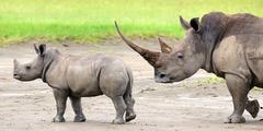 Сафари в Кения - Фотогалерия - снимка 23