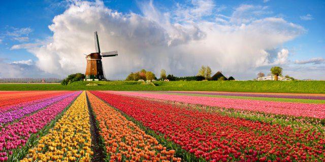 Амстердам - градът на лалетата