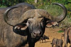 Най-доброто от Кения и Танзания - Фотогалерия - снимка 3