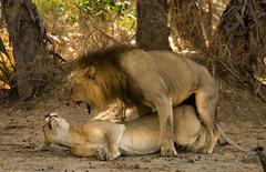 Най-доброто от Кения и Танзания - Фотогалерия - снимка 4