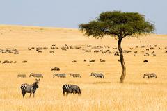 Най-доброто от Кения и Танзания - Фотогалерия - снимка 6