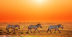 Най-доброто от Кения и Танзания - Фотогалерия - снимка 7