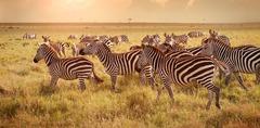 Най-доброто от Кения и Танзания - Фотогалерия - снимка 13