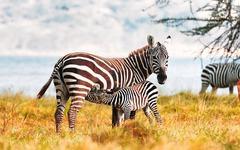 Най-доброто от Кения и Танзания - Фотогалерия - снимка 16