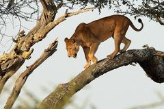 Най-доброто от Кения и Танзания - Фотогалерия - снимка 17