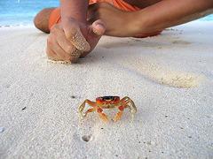 Почивка в Доминикана - Фотогалерия - снимка 2