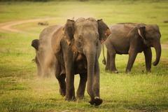 Шри Ланка и Малдиви - Перлите на Индийския океан - Фотогалерия - снимка 4