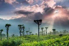 Шри Ланка и Малдиви - Перлите на Индийския океан - Фотогалерия - снимка 13