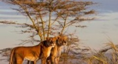 Сафари в Серенгети и почивка на остров Занзибар - Фотогалерия - снимка 1