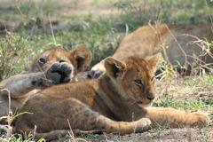 Сафари в Серенгети и почивка на остров Занзибар - Фотогалерия - снимка 3