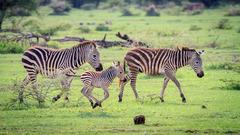Сафари в Серенгети и почивка на остров Занзибар - Фотогалерия - снимка 5