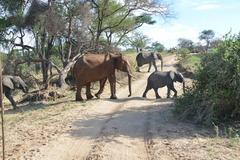 Сафари в Серенгети и почивка на остров Занзибар - Фотогалерия - снимка 11