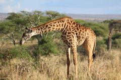 Сафари в Серенгети и почивка на остров Занзибар - Фотогалерия - снимка 15