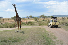 Сафари в Танзания и All Inclusive на остров Занзибар - Фотогалерия - снимка 16