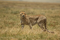 Сафари в Танзания и All Inclusive на остров Занзибар - Фотогалерия - снимка 17