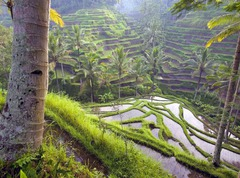 Почивка на остров Бали и Сингапур - Фотогалерия - снимка 3