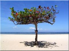 Почивка на остров Бали и Сингапур - Фотогалерия - снимка 10