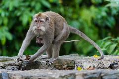 Нова година на райския остров Бали - Фотогалерия - снимка 7