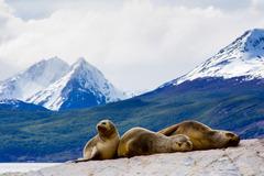 Патагония - суровата красота на Аржентина и Чили - Фотогалерия - снимка 11